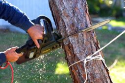 Why You May Have To Use A Tree Removal Service?